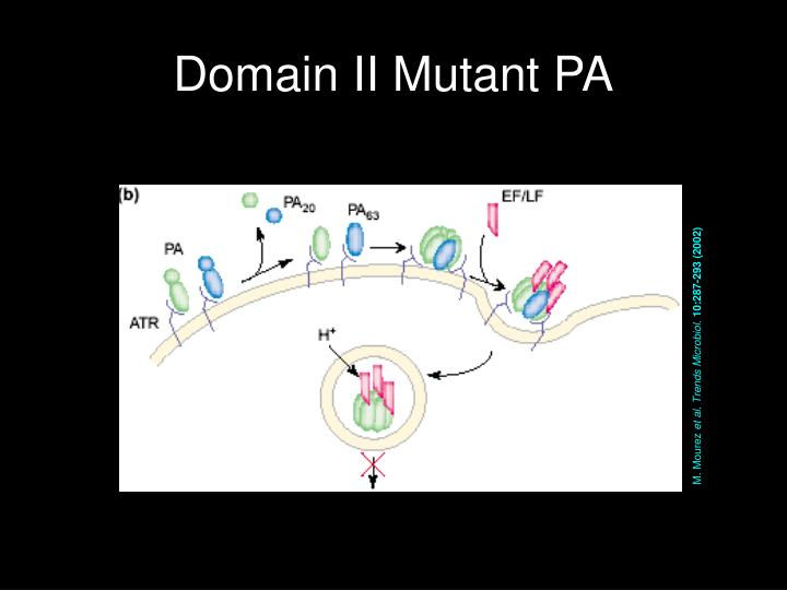 Domain II Mutant PA