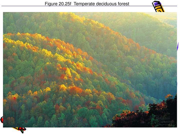 Figure 20.25f  Temperate deciduous forest