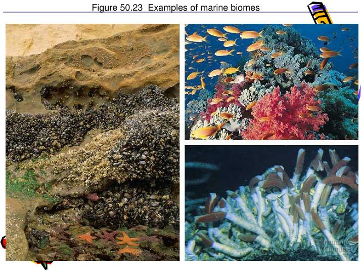 Figure 50.23  Examples of marine biomes