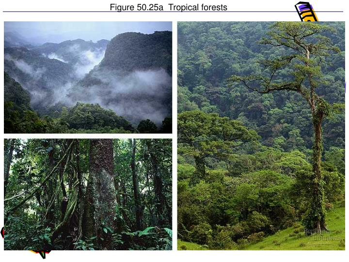 Figure 50.25a  Tropical forests