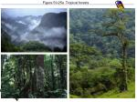 figure 50 25a tropical forests