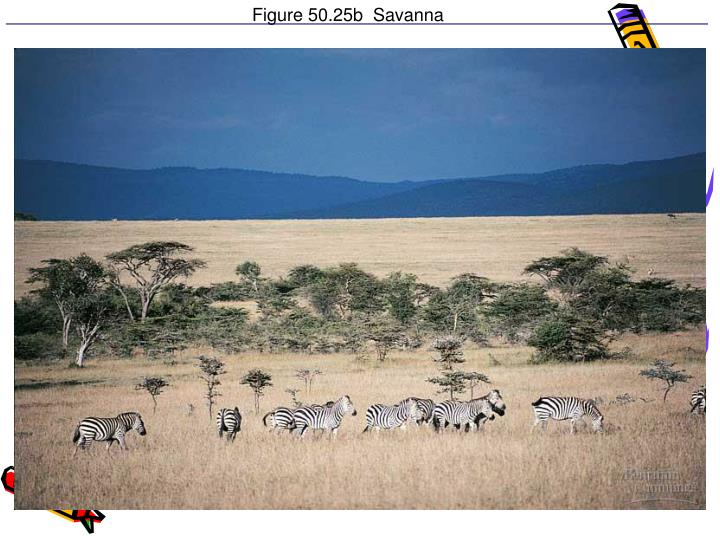 Figure 50.25b  Savanna