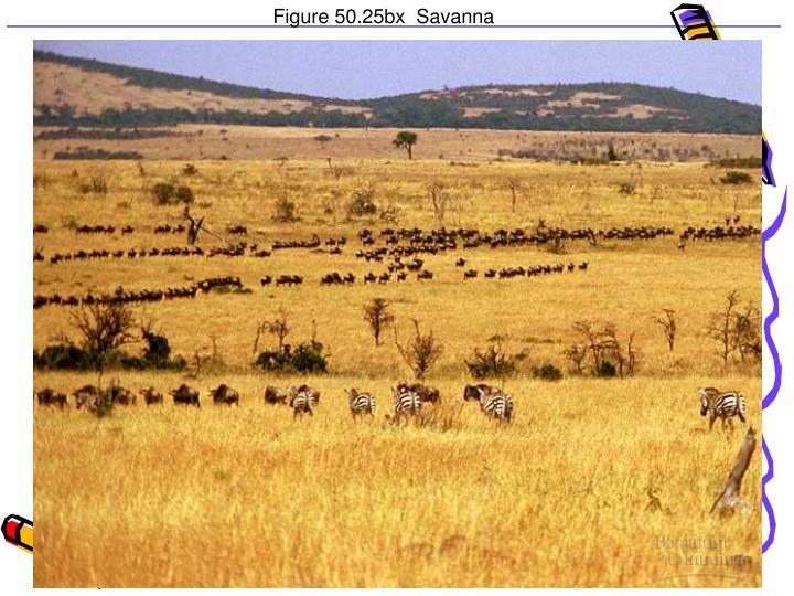 Figure 50.25bx  Savanna