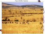 figure 50 25bx savanna