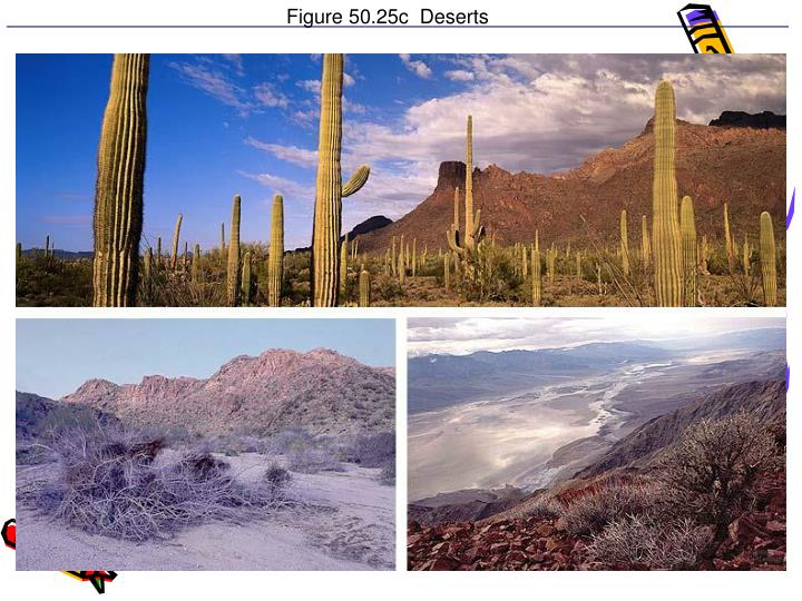 Figure 50.25c  Deserts