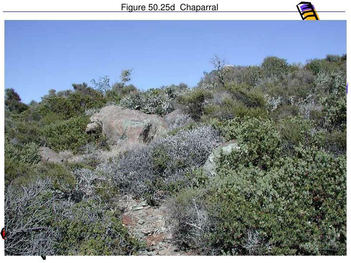 Figure 50.25d  Chaparral