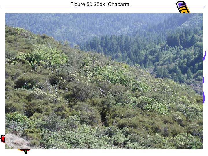 Figure 50.25dx  Chaparral