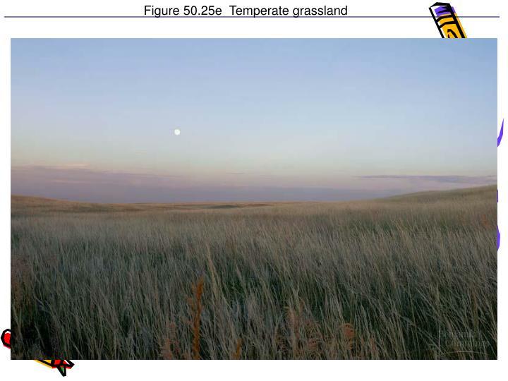 Figure 50.25e  Temperate grassland
