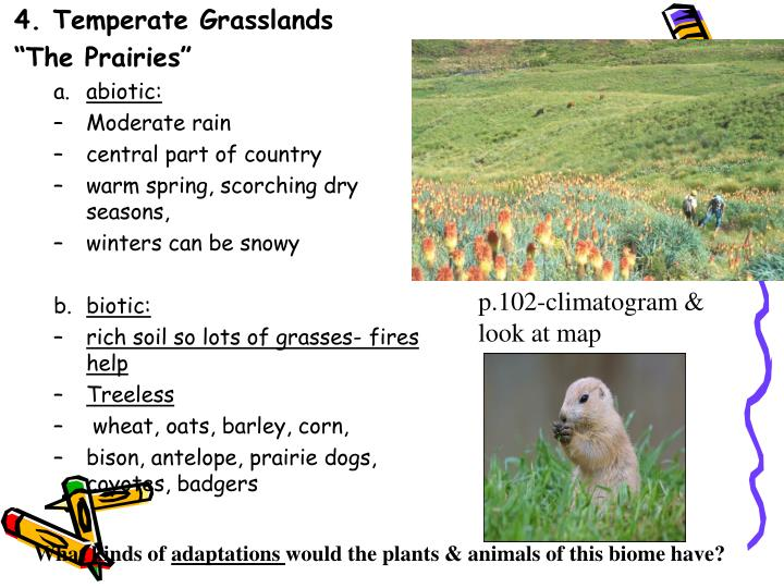 4. Temperate Grasslands