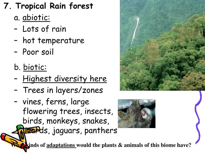 7. Tropical Rain forest