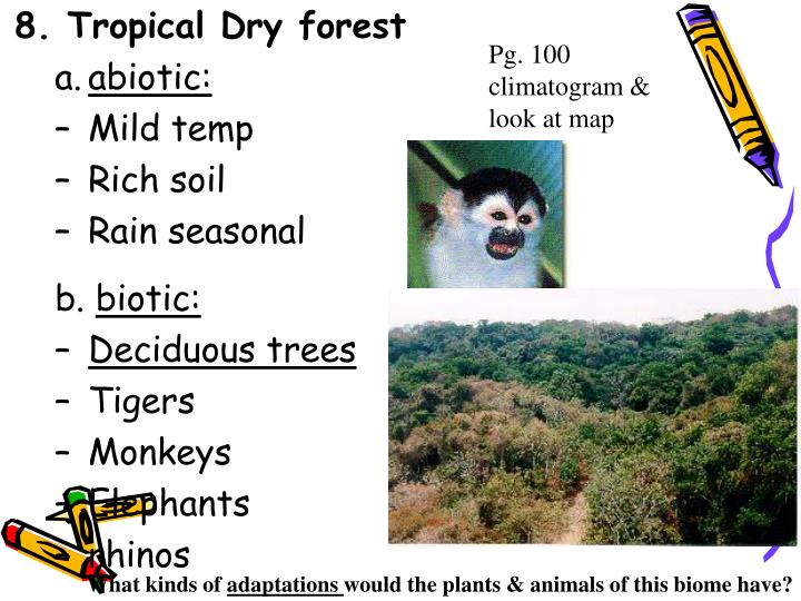 8. Tropical Dry forest