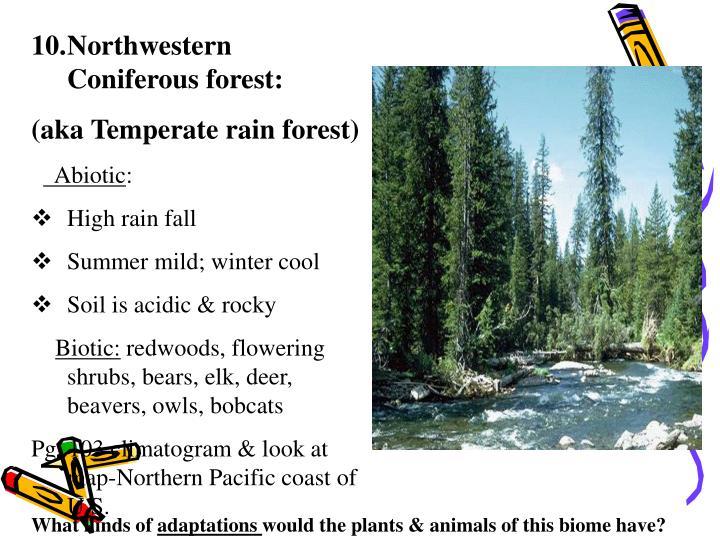 Northwestern Coniferous forest: