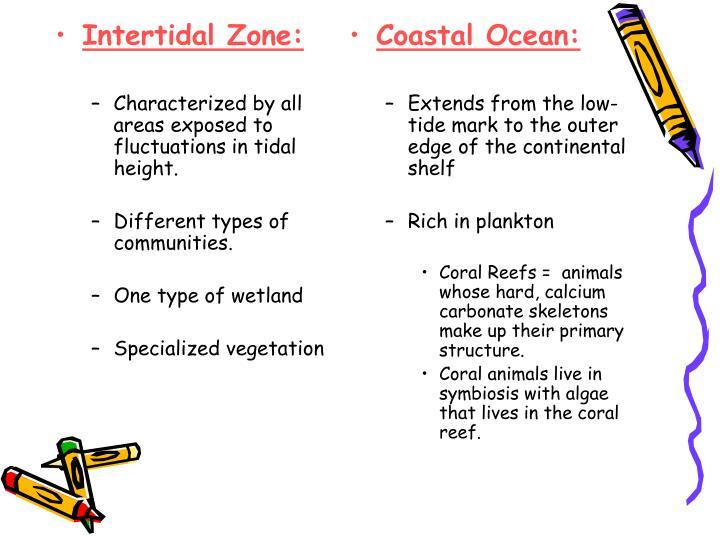 Intertidal Zone: