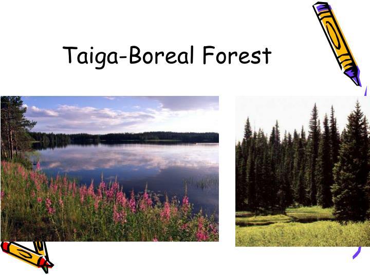Taiga-Boreal Forest