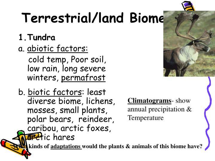 Terrestrial/land Biomes