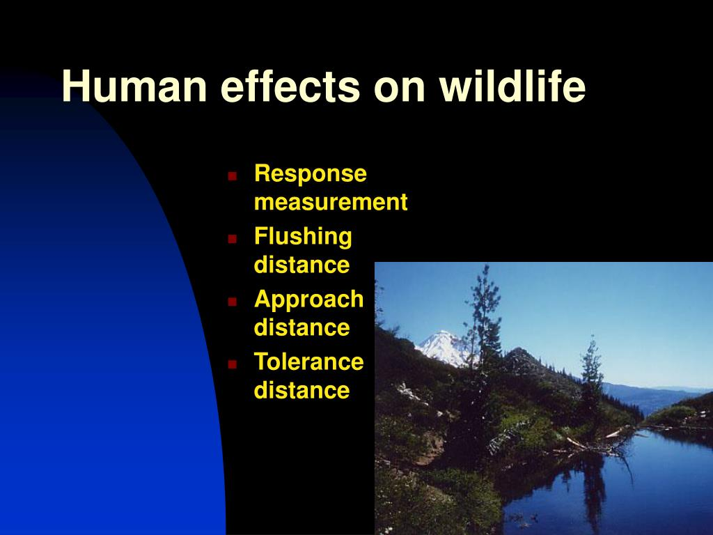 Human effects on wildlife