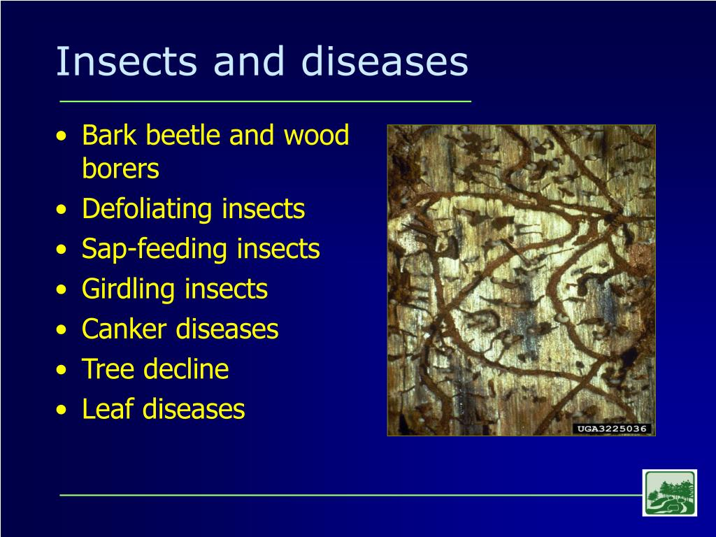 Insects and diseases