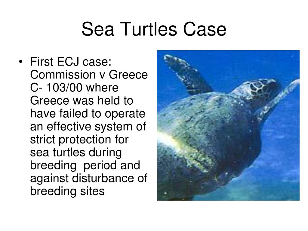 First ECJ case: Commission v Greece C- 103/00 where Greece was held to have failed to operate an effective system of strict protection for sea turtles during breeding  period and against disturbance of breeding sites