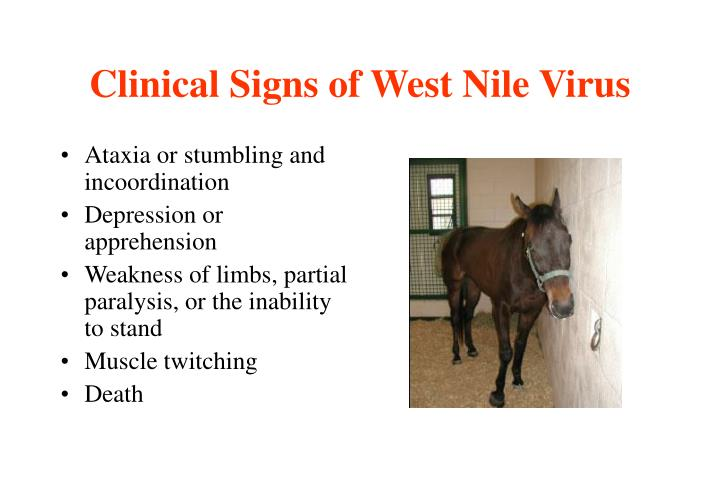 Clinical Signs of West Nile Virus