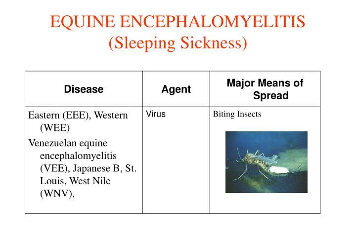 EQUINE ENCEPHALOMYELITIS