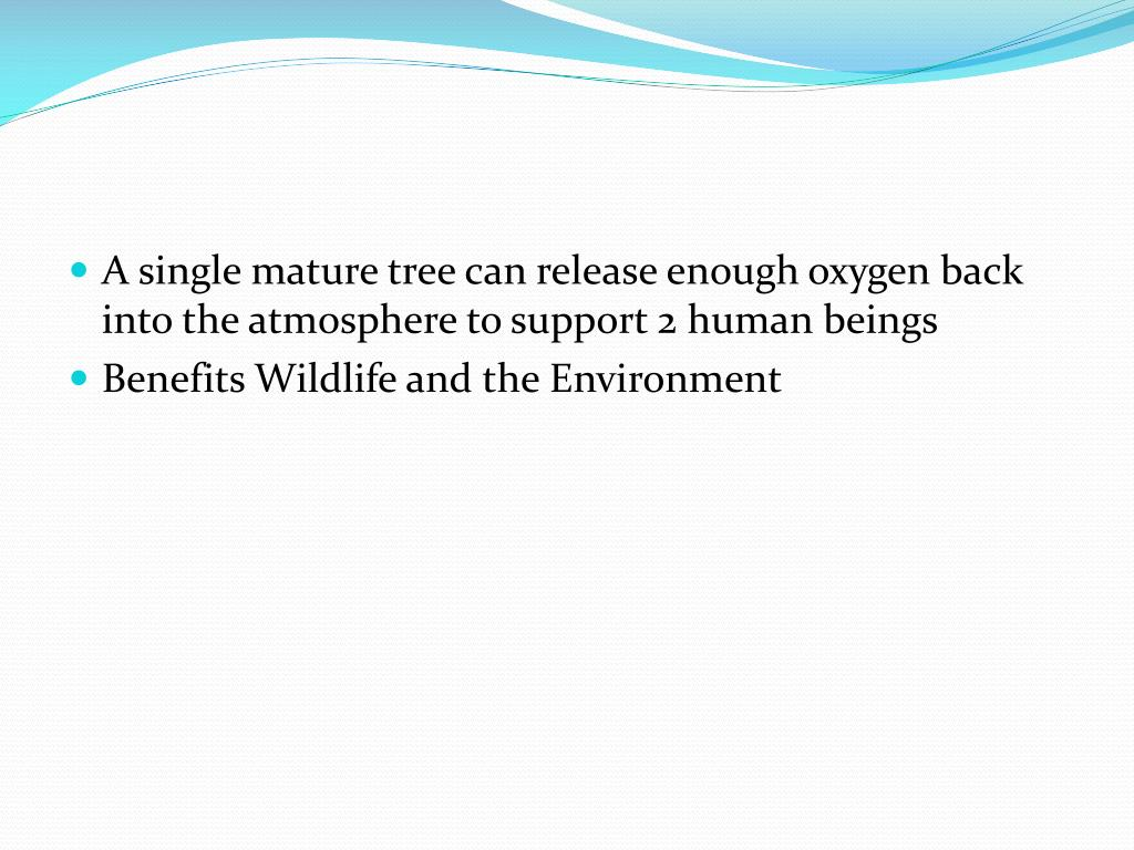 A single mature tree can release enough oxygen back into the atmosphere to support 2 human beings