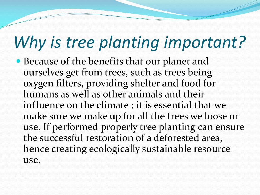 Why is tree planting important?