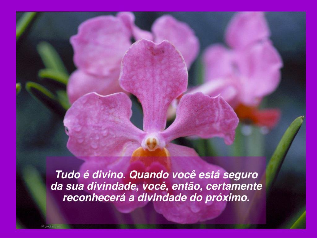 Tudo é divino. Quando você está seguro da sua divindade, você, então, certamente reconhecerá a divindade do próximo.