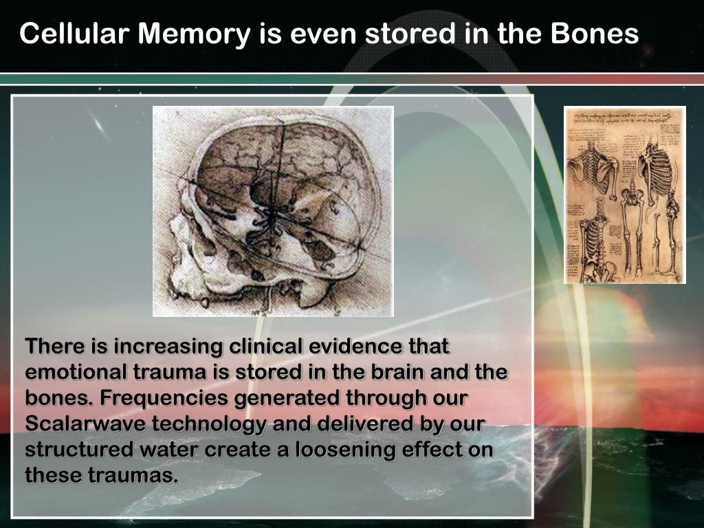 Cellular Memory is even stored in the Bones