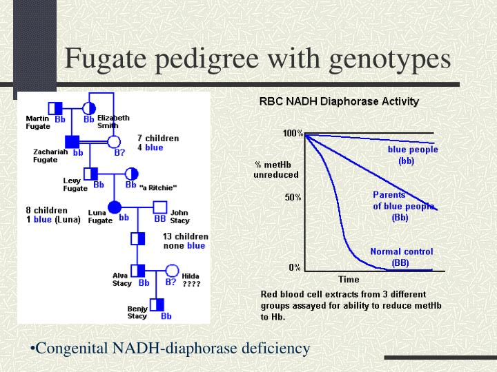 Fugate pedigree with genotypes