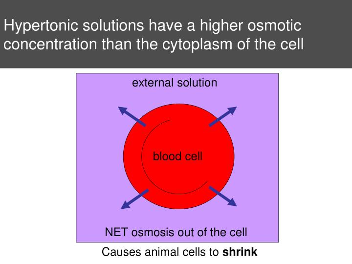 Hypertonic solutions have a higher osmotic concentration than the cytoplasm of the cell