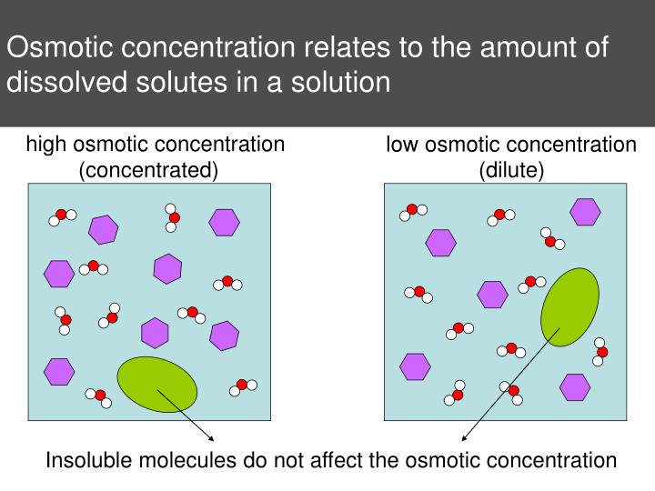 Osmotic concentration relates to the amount of dissolved solutes in a solution