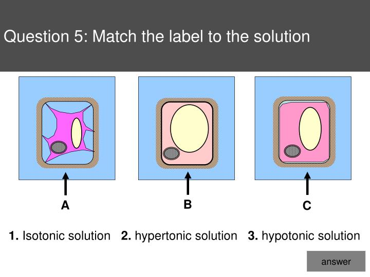 Question 5: Match the label to the solution