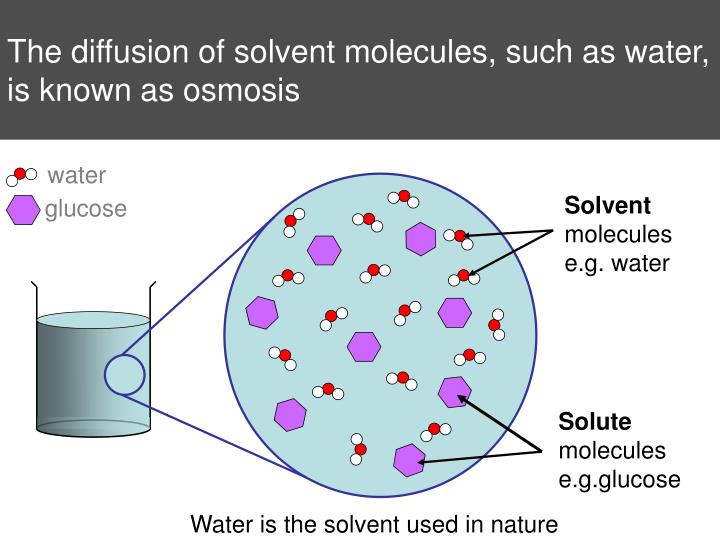 The diffusion of solvent molecules, such as water, is known as osmosis