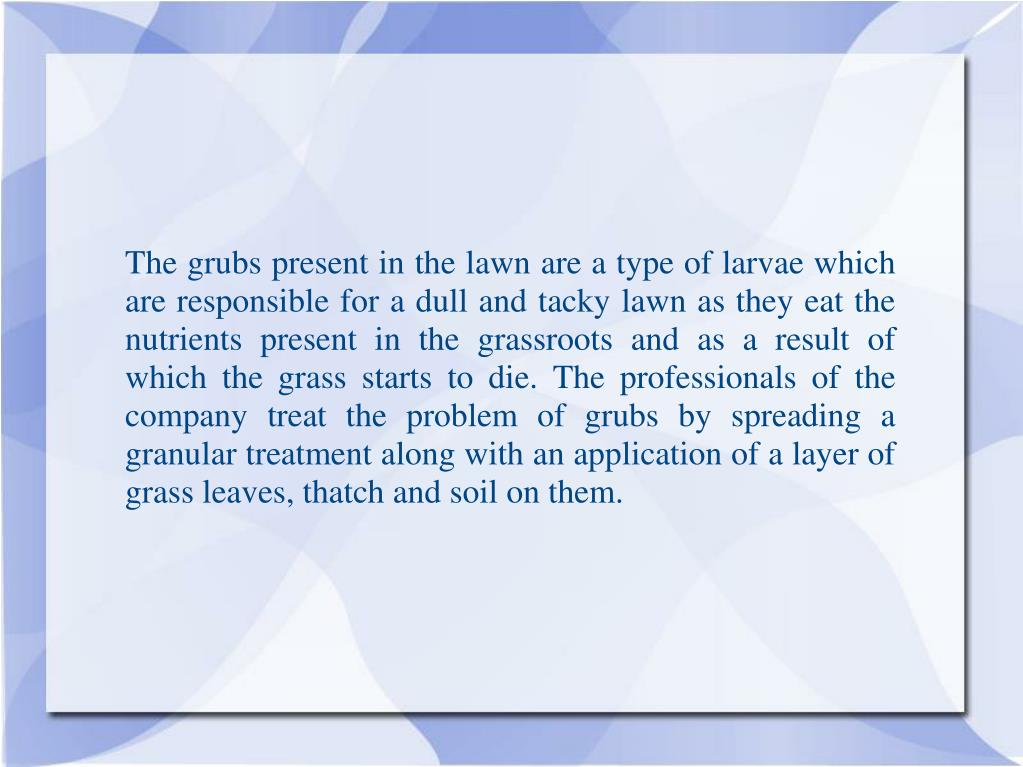 The grubs present in the lawn are a type of larvae which are responsible for a dull and tacky lawn as they eat the nutrients present in the grassroots and as a result of which the grass starts to die. The professionals of the company treat the problem of grubs by spreading a granular treatment along with an application of a layer of grass leaves, thatch and soil on them.