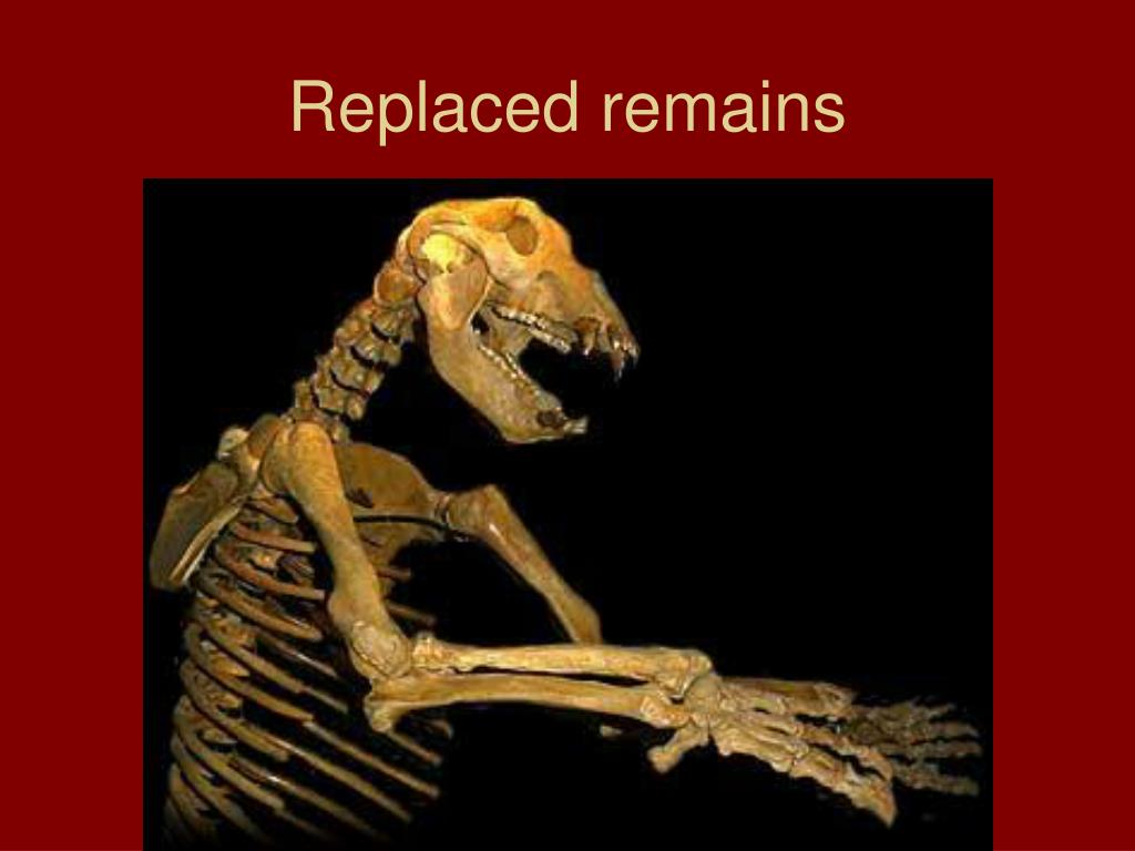 Replaced remains