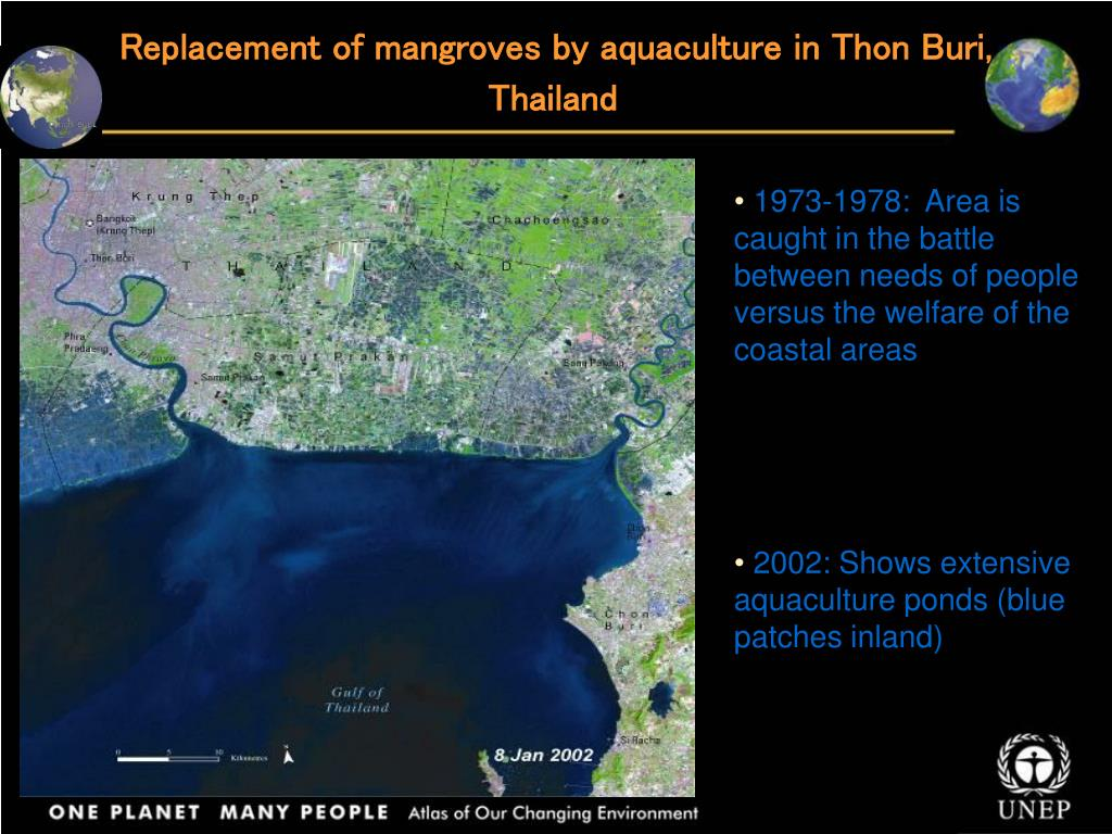 Replacement of mangroves by aquaculture in Thon Buri, Thailand