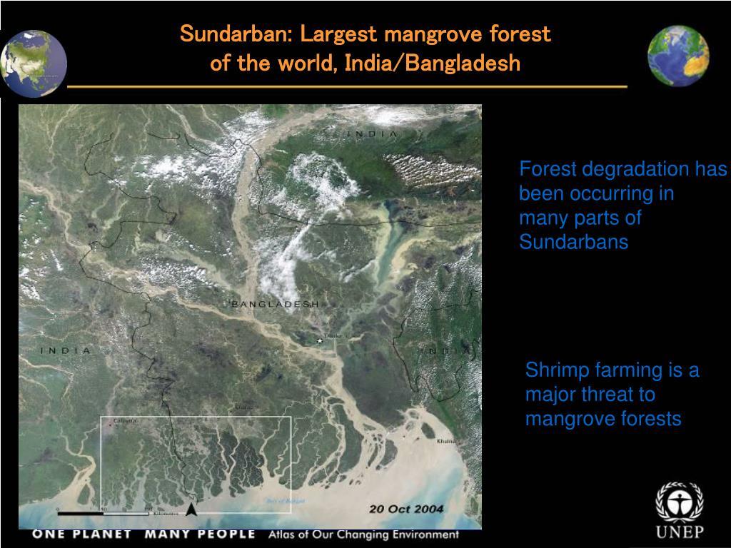 Sundarban: Largest mangrove forest