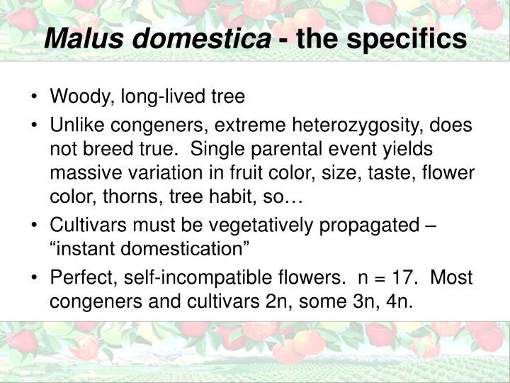 Malus domestica
