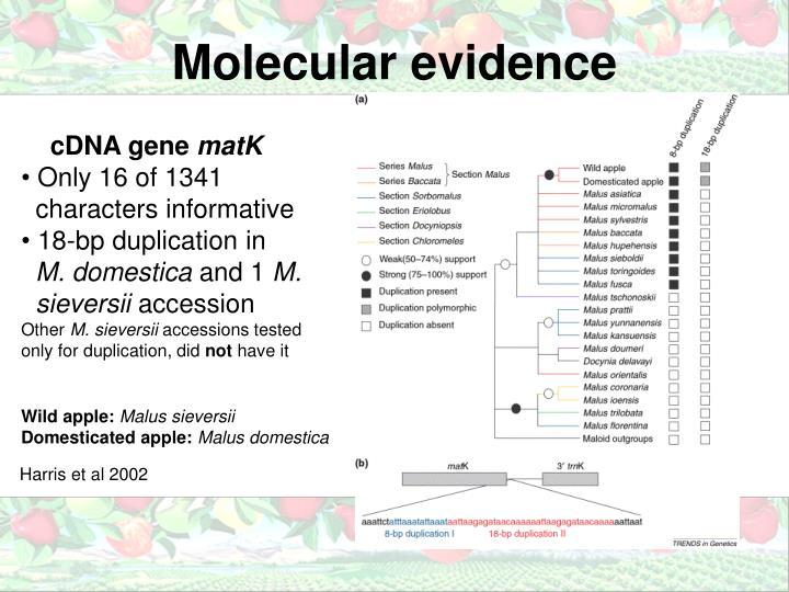 Molecular evidence