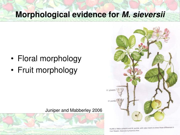 Morphological evidence for