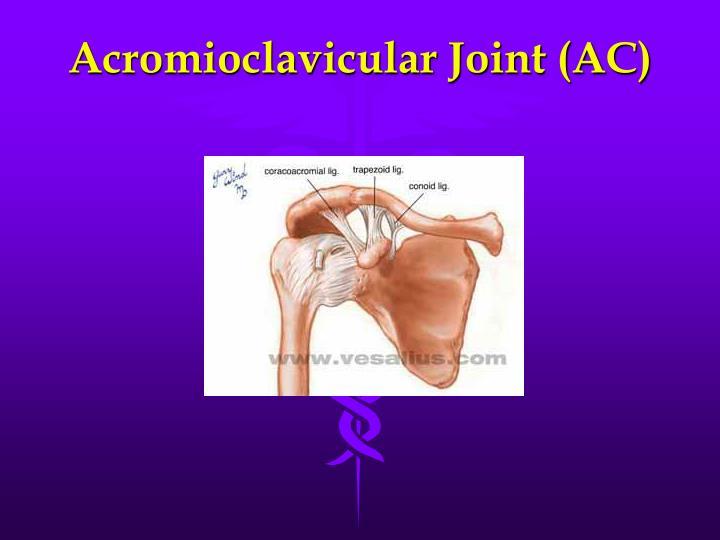 Acromioclavicular Joint (AC)