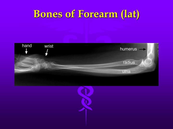 Bones of Forearm (lat)