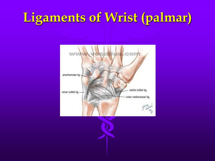 Ligaments of Wrist (palmar)