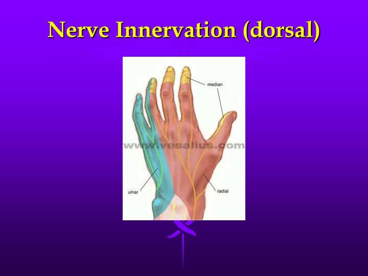 Nerve Innervation (dorsal)