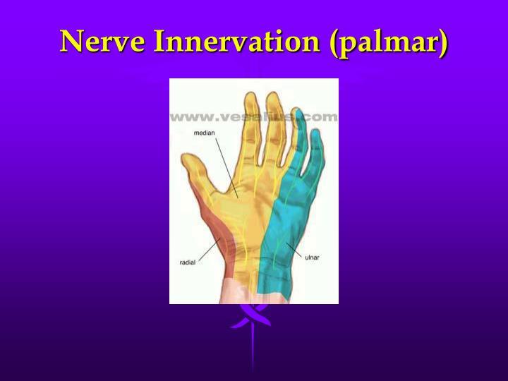 Nerve Innervation (palmar)