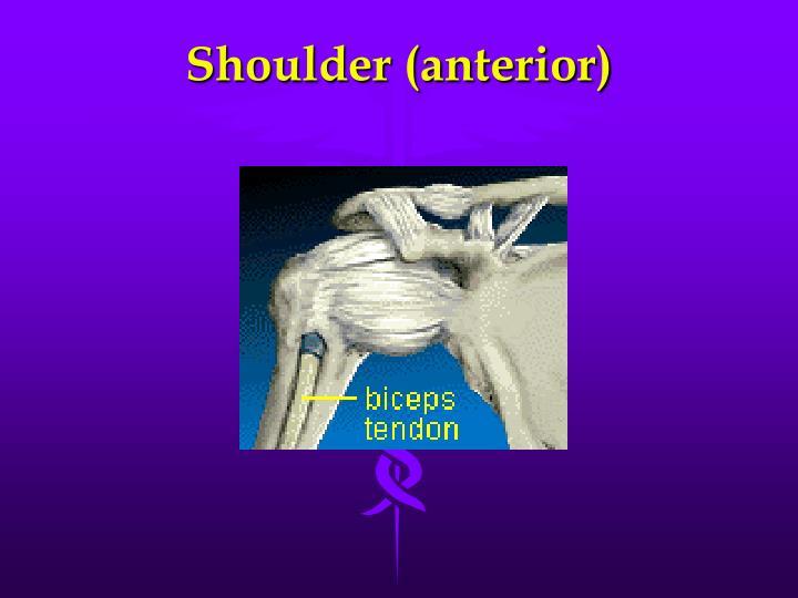 Shoulder (anterior)