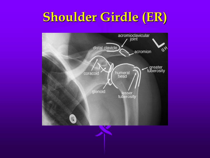 Shoulder Girdle (ER)