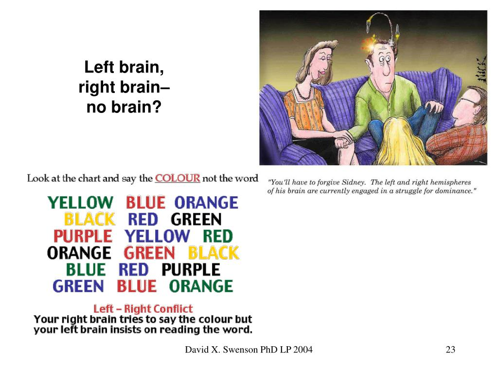 Left brain, right brain– no brain?