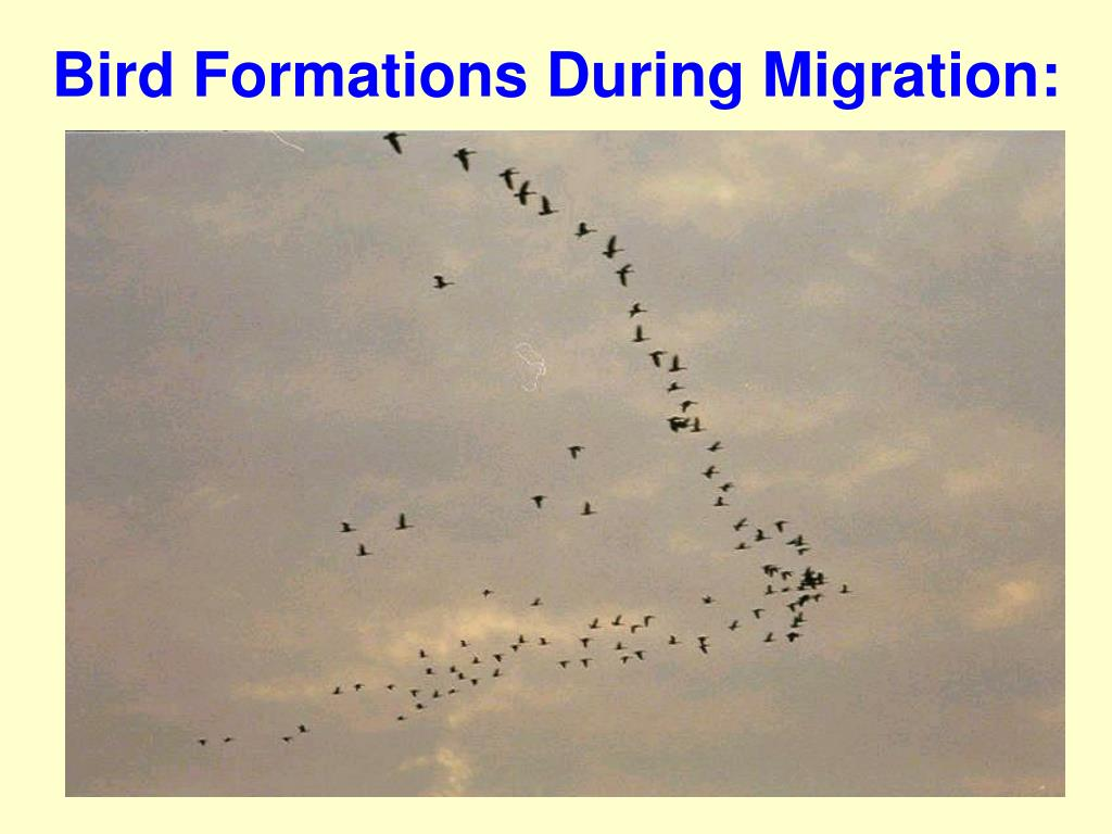 Bird Formations During Migration: