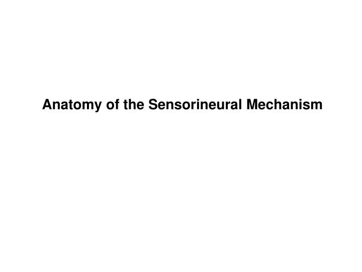 Anatomy of the Sensorineural Mechanism